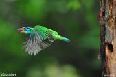 2年沒拍5色鳥了:DSC_7005+.jpg