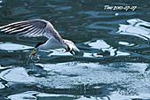 熱潮打鳥:990707 141+.jpg