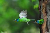 2年沒拍5色鳥了:DSC_7049+10+0.jpg