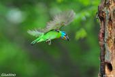 2年沒拍5色鳥了:DSC_7016+.jpg