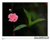 杏花林:a 027