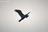 小黑 5 拍魚鷹:DSC_4060+.jpg