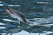 熱潮打鳥:990707 138+.jpg