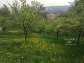 訪歐43天-布拉格-佩特辛山:IMG_3861_副本.jpg