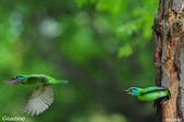 2年沒拍5色鳥了:DSC_7038+.jpg