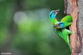 2年沒拍5色鳥了:DSC_6890+.jpg