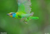 2年沒拍5色鳥了:DSC_7112+.jpg