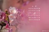 烏來櫻花:DSC_7297+0.jpg