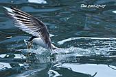 熱潮打鳥:990707 139+0.jpg