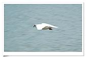 鴿子:a 116
