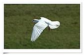 鴿子:a 101-