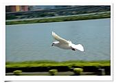 鴿子:a 106-