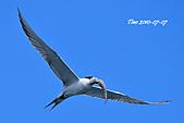 熱潮打鳥:990707 057+0.jpg
