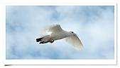 鴿子:a 147