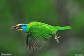 2年沒拍5色鳥了:DSC_7123++.jpg