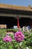 2016年4月訪歐洲43天-北京:DSC_6645+.jpg