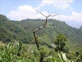 2008年08月25日 - 奮起湖兼攻頂:1365936178.jpg