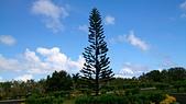 我在帛琉新首都:DSC_1936.jpg