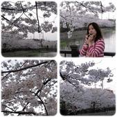 2012。Japan Trip。Tokyo:0409010a.jpg