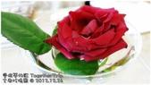 古典玫瑰園:1226a02.JPG