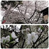 2012。Japan Trip。Tokyo:0411012a.jpg