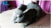 兔子 兔子 Rabbit Rabbit:0712a07.JPG