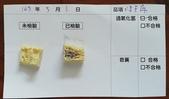 106-2每日食材檢驗:1070503凍豆腐快篩