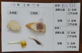 107-1每日食材檢驗:1070927豆干片.黃豆芽快篩