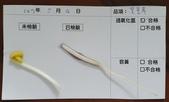 106-2每日食材檢驗:1070504黃豆芽快篩