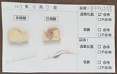 107-1每日食材檢驗:1070907豆干片.綠豆芽快篩