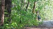 Owl Creek Campsite:IMG_0195