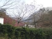 103年新社桃李河畔:DSC07503.JPG