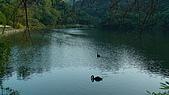 桃園大溪慈湖:DSC02404.JPG