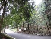 103年八仙山森林國家公園&谷關:DSC08275.JPG