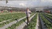 103年潭子採草莓&潭子蘭園&清泉岡:DSC07729.JPG