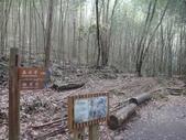 103年八仙山森林國家公園&谷關:DSC08282.JPG