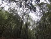 103年八仙山森林國家公園&谷關:DSC08283.JPG