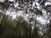 103年八仙山森林國家公園&谷關:DSC08285.JPG