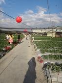 103年潭子採草莓&潭子蘭園&清泉岡:DSC07742.JPG