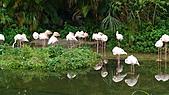 2011年台北木柵動物園:DSC03825.JPG