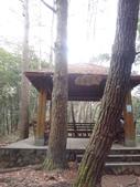 103年八仙山森林國家公園&谷關:DSC08291.JPG