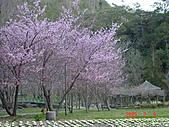 武陵農場-櫻花盛開:DSC00360.JPG