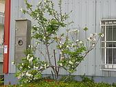 櫻花:DSC00893.jpg