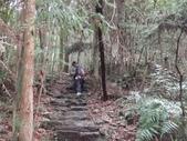 103年八仙山森林國家公園&谷關:DSC08295.JPG