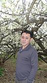 櫻花(2011年)台中新社賞櫻:DSC03476.JPG