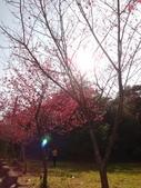 103年新社桃李河畔:DSC07387.JPG