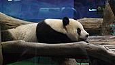 2011年台北木柵動物園:DSC03853.JPG