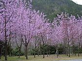 武陵農場-櫻花盛開:DSC00001.JPG