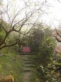 103年新社桃李河畔:DSC07440.JPG