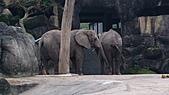 2011年台北木柵動物園:DSC03900.JPG
